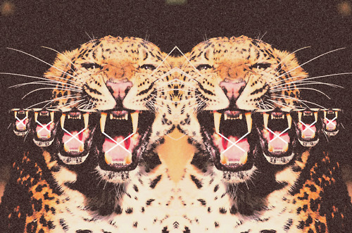NovellaRoyale_Leopard Collage_June 2012
