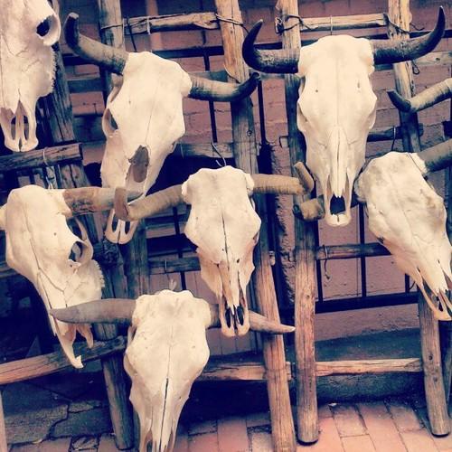 MotherEarthFatherSky_Bull Skulls_May 2013